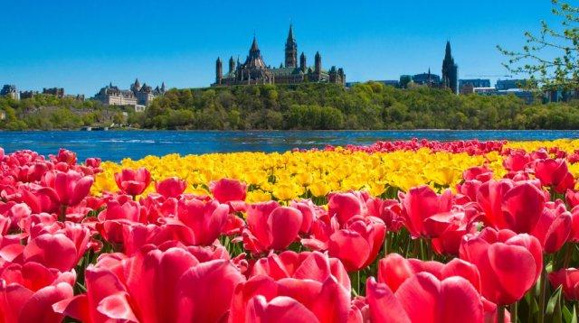 Canadian-Tulip-Festival1