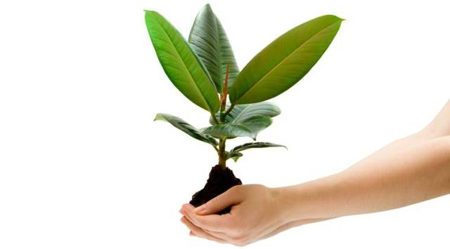 female hand holding a green plant